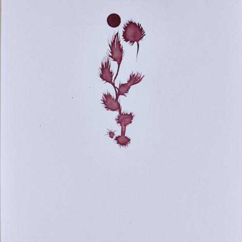 Untitled, 2014, beet pigment on paper, 6in x 8in, photo by Andrew McAllister