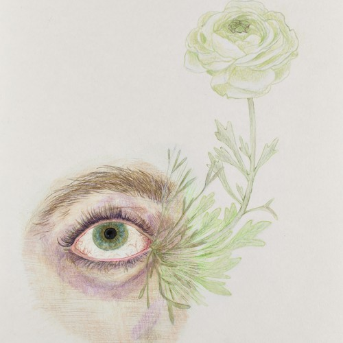Full Bloom, 2015, colored pencil on paper, 11in x 13.5in, photo by Andrew McAllister